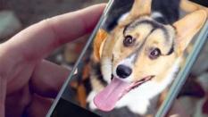 5 Aplikasi yang Harus Dimiliki oleh Pecinta Anjing