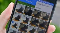 Lucu! Bisa Bikin Video Singkat Hewan Piaraan dengan Google Photos!